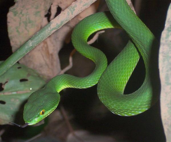 rencontre avec des collectionneurs de serpents dangereux
